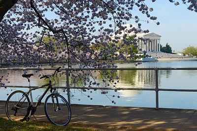 Bike 4 .jpg