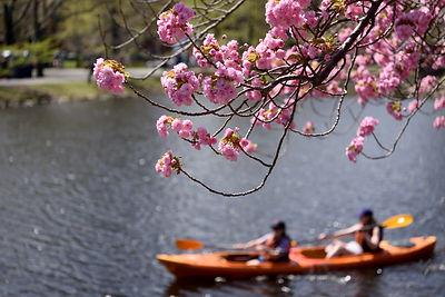 Kayak .jpg