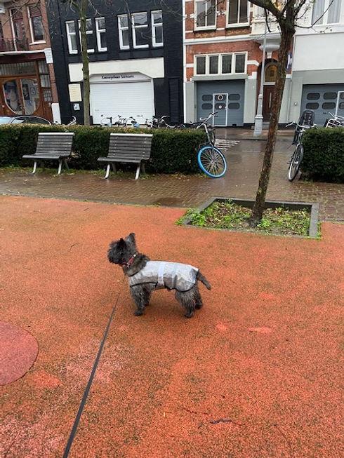 Tips dogwalk.jpg