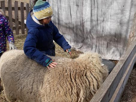 The 3rd Grade Farm Trip