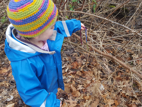 Helping the Birds Build Their Nests