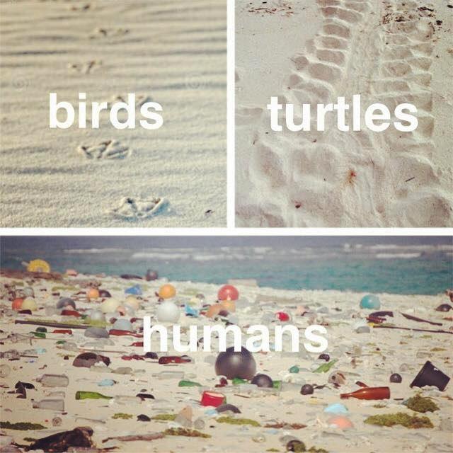 Pássaros, Tartarugas, Humanos...