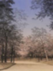 celeste-strada-P (2).jpg