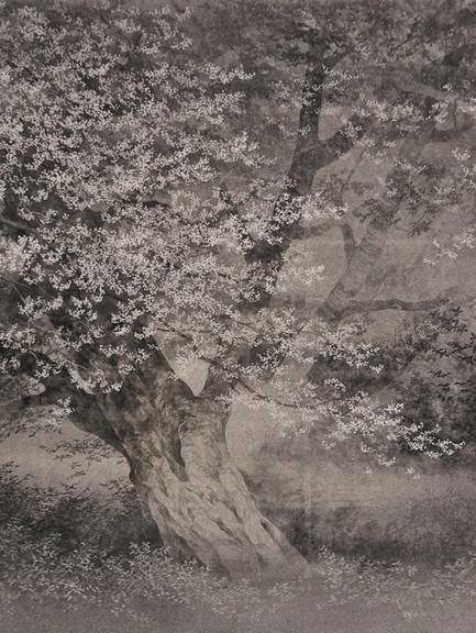 ciliegio-secolare-P.jpg