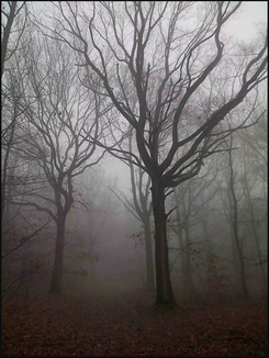 arbres prive.PNG