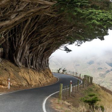 Leading lines of Otago Peninsula