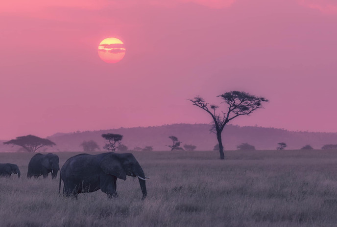 Sunser in the Serengeti