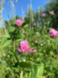 BeeToo Honey Farm Flowers