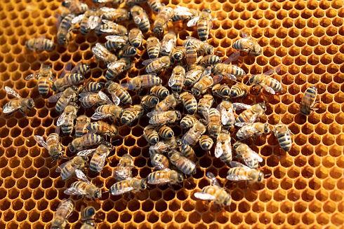 BeeTooBees.jpg