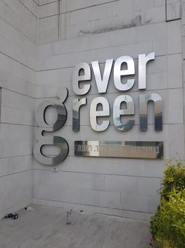 ever green.jpeg