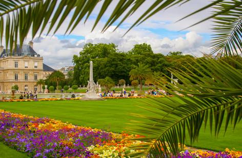 Jardin du Luxembourg Palms