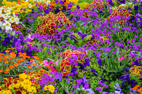 Colors of the Jardin du Luxembourg