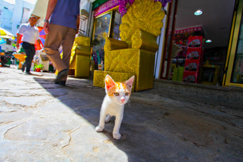 A Furry Local, Tetouan