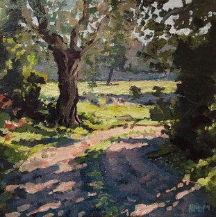 Steliata afternoon sunlight 8x8.jpg