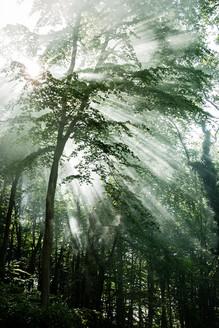 Flintbatch Woods