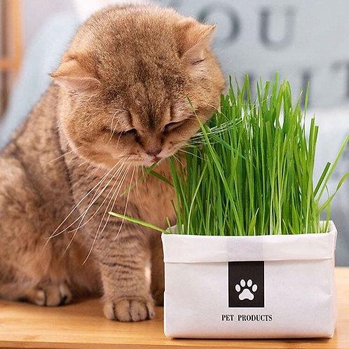 懶人貓草種子套裝