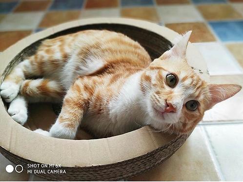 貓碗窩 貓抓板