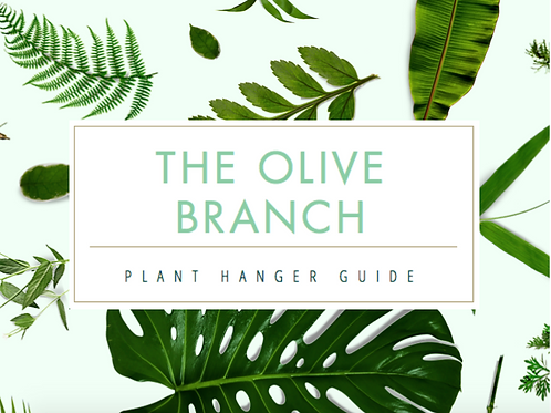 Beginner Plant Hanger Guide