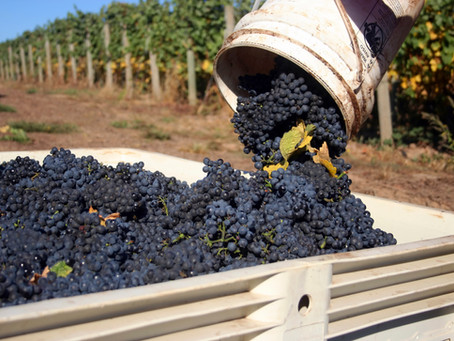 The making of Argentina, Malbec
