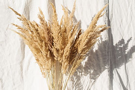 beige-reeds-linen.jpg