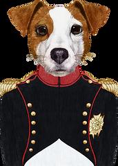 ナポレオン犬