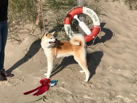 Öland Dog Show