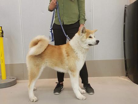 Lidköping Nordic Dog Show 2018