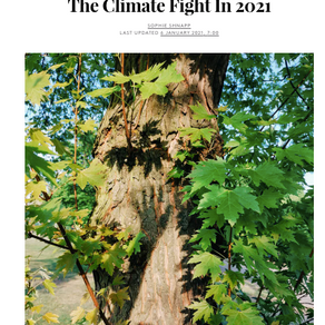 Reasons To Be Hopeful About The Climate Fight In 2021