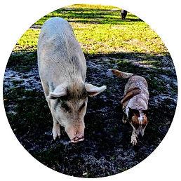 animal sanctuary animals