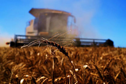 WheatHarvest2.jpg