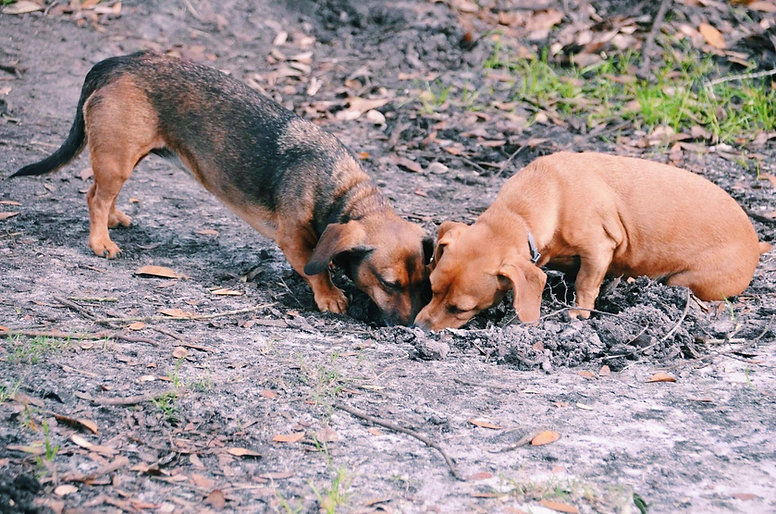 animal sanctuary dogs