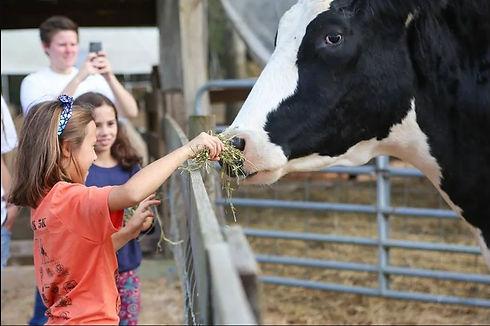 cowws.JPG