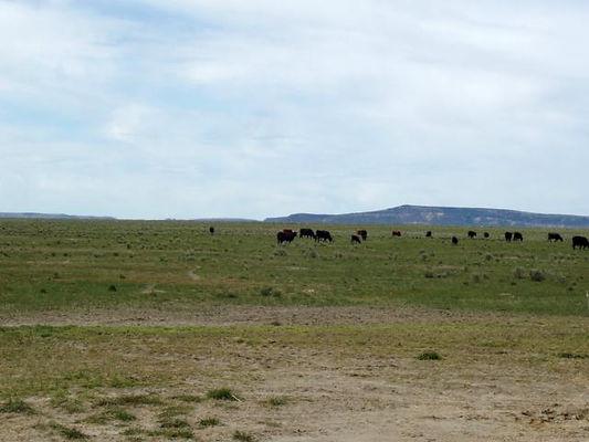 0_13999692_Rudio_Creek_Ranch-7.jpg