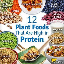 Protein_Meme-Sep16-1024x1024.jpg