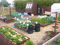 MolloysGardenWorld-OurAllotments-WhatABe