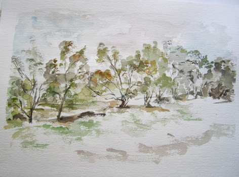 Trees in the Negev