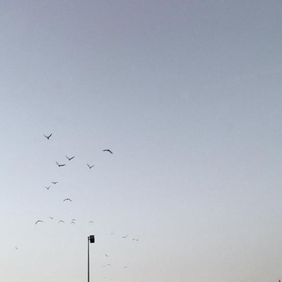 Early Birds.jpg