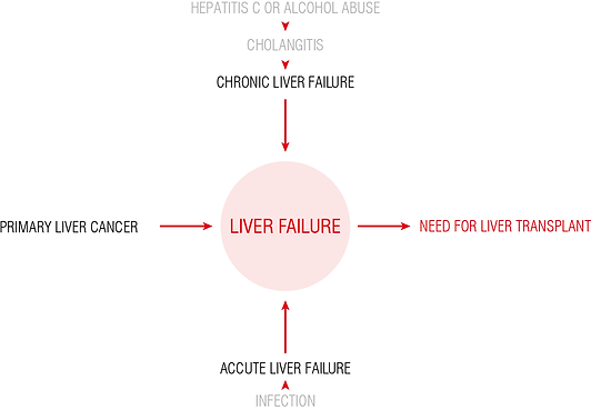 CAUSES FOR LIVER TRANS.png