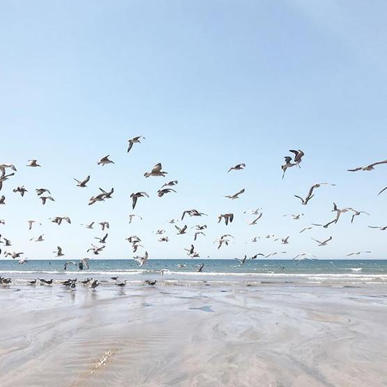 Praia do Matosinhos.jpg