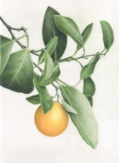 OrangeBranch.png