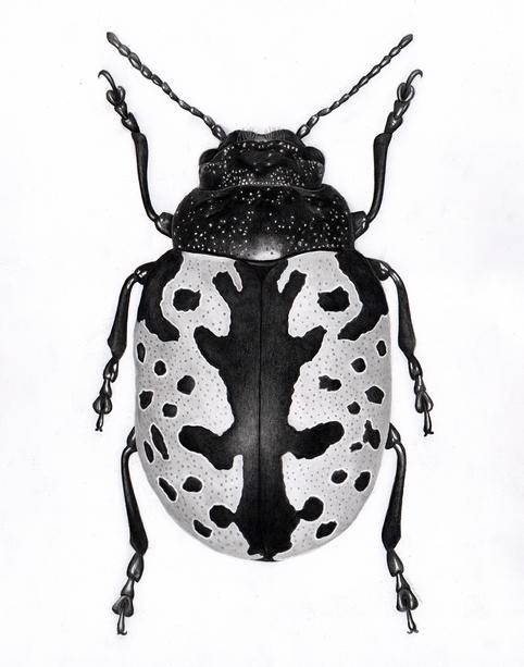 Rorschach Beetle