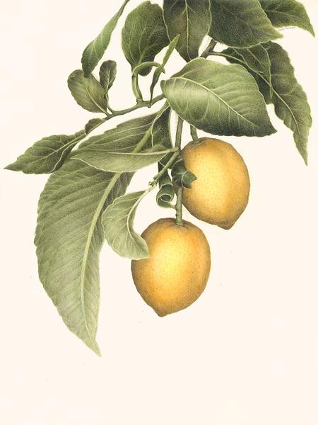LemonSignature.png
