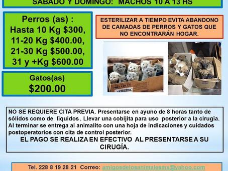 ACTIVIDADES DE AMIGOS DE LOS ANIMALES PARA FEBRERO 2021