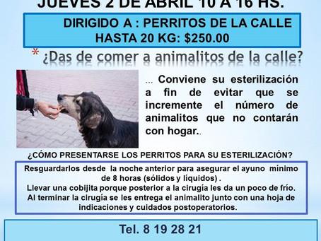ACTIVIDADES DE AMIGOS DE LOS ANIMALES PARA ABRIL 2020