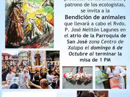 ACTIVIDADES DE AMIGOS DE LOS ANIMALES PARA OCTUBRE 2019