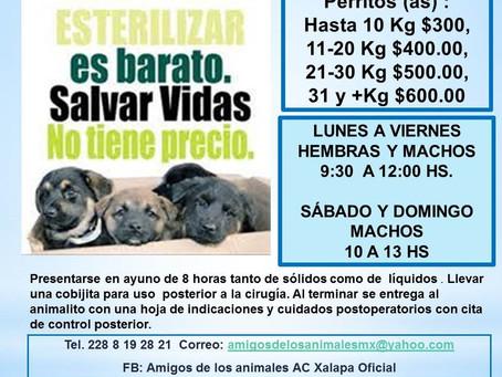 ACTIVIDADES DE AMIGOS DE LOS ANIMALES PARA NOVIEMBRE 2020