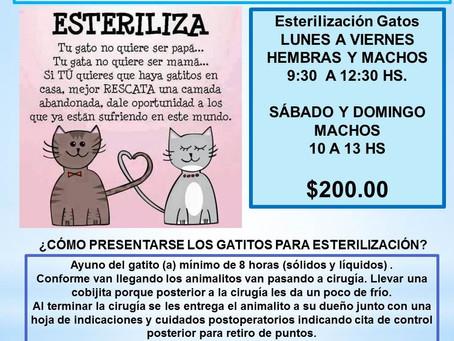 ACTIVIDADES DE AMIGOS DE LOS ANIMALES PARA OCTUBRE 2020