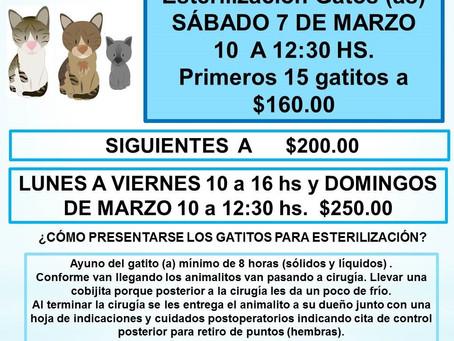 ACTIVIDADES DE AMIGOS DE LOS ANIMALES PARA MARZO 2020