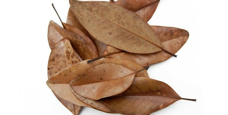 Magnoila Leaves
