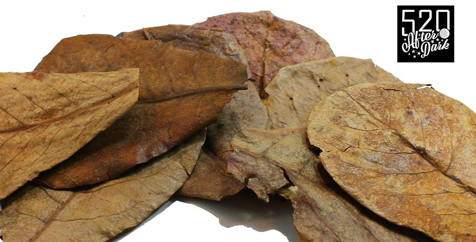 Indian Almond Leaves 6-10""